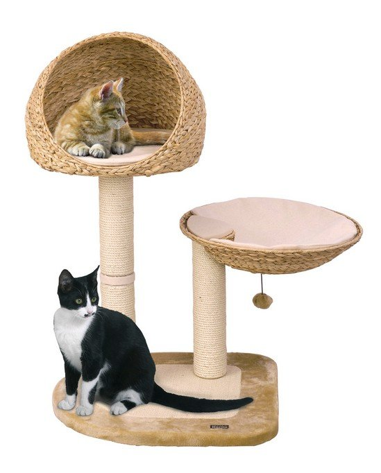 trouver l 39 arbre chat parfait pour son maine coon. Black Bedroom Furniture Sets. Home Design Ideas