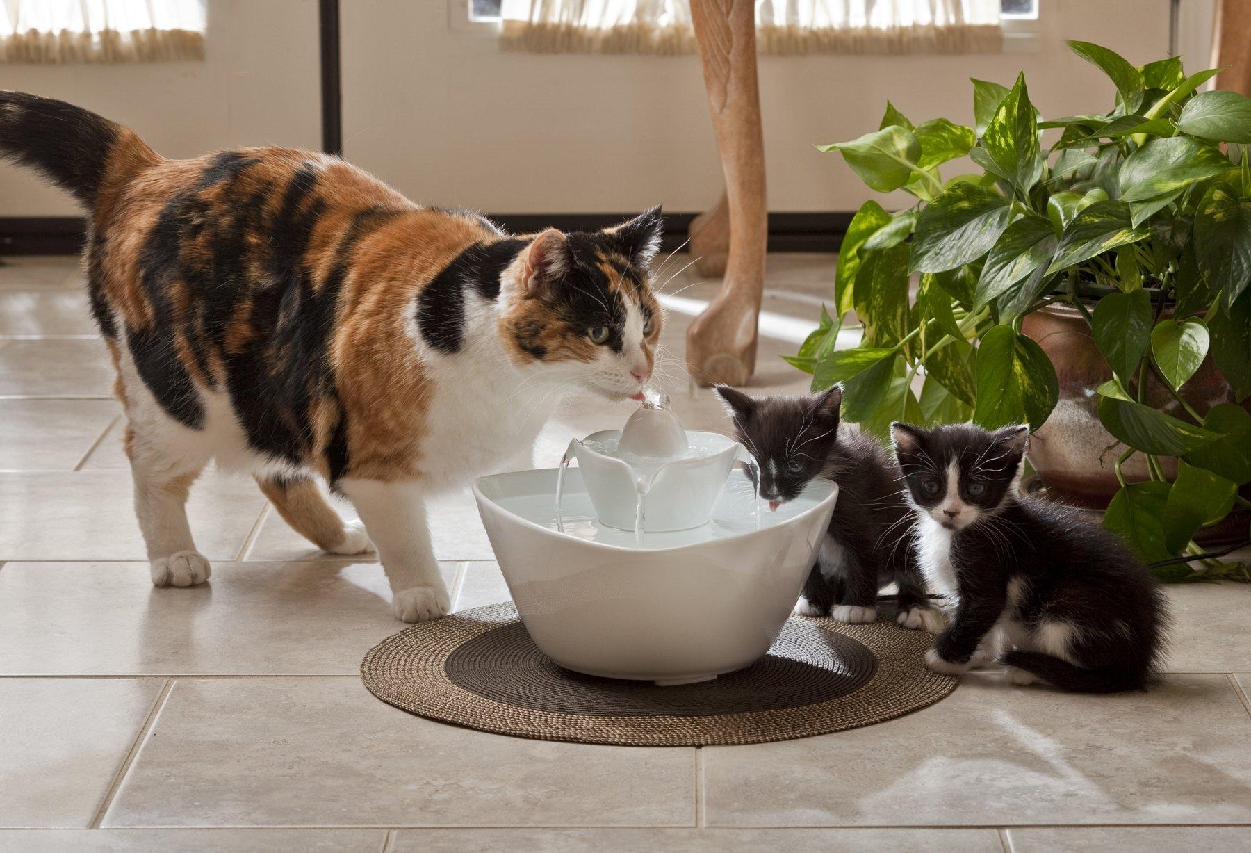 Cat-Kittens_Ceramic
