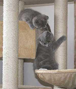 arbre chat pour appartement voici la solution. Black Bedroom Furniture Sets. Home Design Ideas