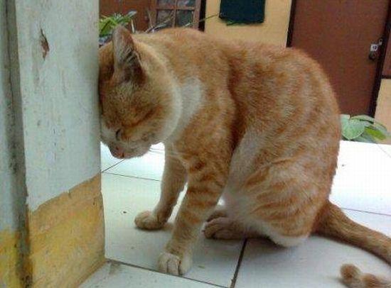 D pression du chat comment reconnaitre les signes - Comment empecher un chat d uriner partout ...