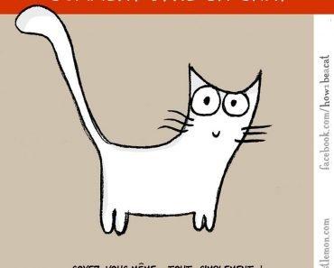 Comment être un chat
