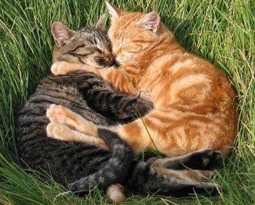 amoureux de chats